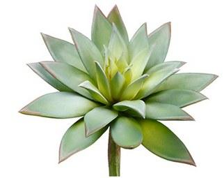 """Echeveria Pick, 9""""- Green/Gray"""