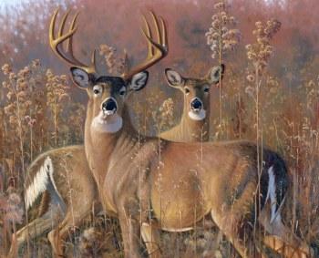 Nature & Wildlife Fabric Panel- Fall Courtship