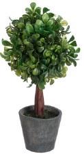 """Plant- Boxwood Topiary, 10"""""""