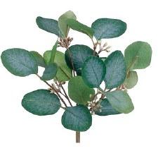 """Eucalyptus Bush, 10""""- Green/Gray"""