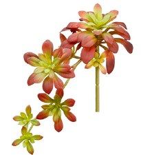 "Soft Aeonium Pick, 11.8""- Burgundy/Green"