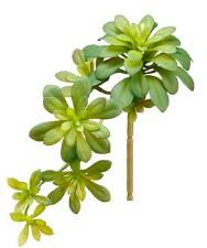 "Soft Aeonium Pick, 11.8""- Green"