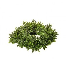 Boxwood Candle Ring, 11""