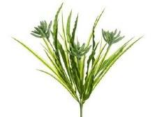 "Succulent Grass Bush 12"""