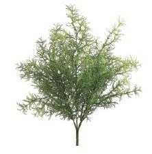 "Sprengeri Grass Bush, 15.5"""