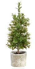 Plant- Boxwood Topiary, 15""
