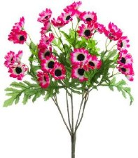 "Cineraria Daisy Bush, 15""- Pink/White"