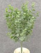 """Eucalyptus Pick, 15""""- Dusty Green"""
