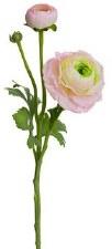 "Ranunculus Spray, 15""- Pink/Green"