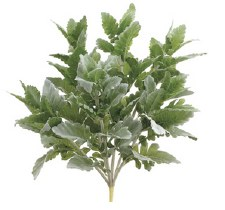 "Dusty Miller Bush, 16.5""- Frosted Green"