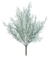 """Wild Grass Bush, 17"""""""