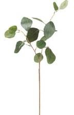 """Eucalyptus Spray, 18"""""""