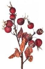 "Parchment Rose Hip Spray, 18""- Burgundy"
