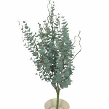 "Eucalyptus Bush 20"""
