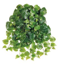 """Puff Philodendron Hanging Bush, 21"""""""