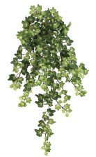 "Lace Ivy Hanging Bush, 22.5""- Green & Yellow"