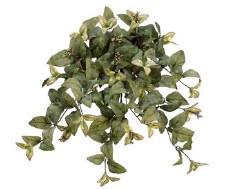 "Magnolia Leaf Hanging Bush, 22"""