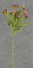 """Ranunculus (Mini) Flower Spray, 22""""- Purple"""