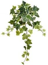 """Ivy Hanging Bush, 22""""- Variegated"""