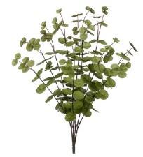"Eucalyptus Bush, 23"""