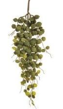 "Button Leaf Hanging Spray, 24"""