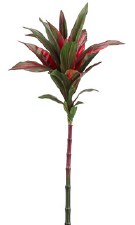 Cordyling Spray, 24""