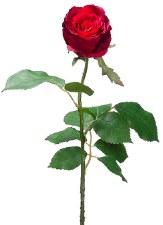 "Cottage Rose Bud Spray, 27.5""- Red"