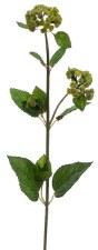 """Meadow Flower Spray, 27""""- Green"""