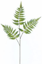 Forest Fern Spray, 33""