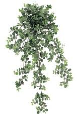 "Peperomia Hanging Bush, 34"""