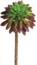 """Mini Echeveria Pick, 5""""- Green/Purple"""