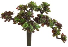 "Sedum Pick, 5""- Burgundy/Green"