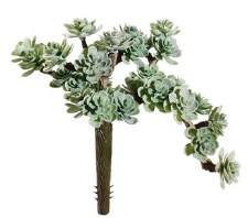 "Sedum Pick, 5""- Dusty Green"