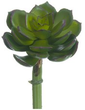 "Echeveria Pick, 5""- Green/Pink"