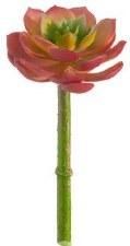 """Echeveria Pick, 5""""- Rose/Green"""