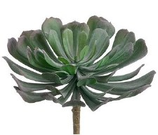 "Aeonium Pick, 6""- Green/Gray"