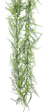 Asparagus Fern Garland, 6ft