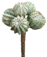 "Barrel Cactus Pick, 6""- Green/Gray"