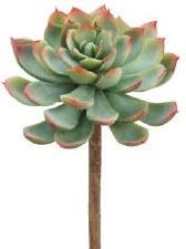 """Echeveria Pick, 7""""- Green/Red"""