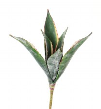 """Agave Plant, 14"""""""