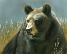 Nature & Wildlife Fabric Panel- Bear Portrait