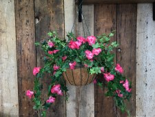 Spring Floral Hanging Basket- Morning Glory, Beauty Pink