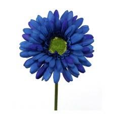 "Gerbera Daisy Stem, 18""- Blue"