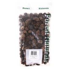Pine Cones- Black Spruce