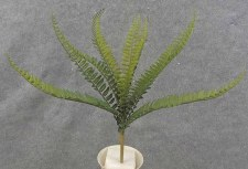 Boston Fern Bush, 14""