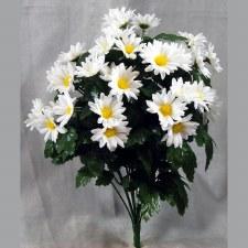 Daisy Bush- White