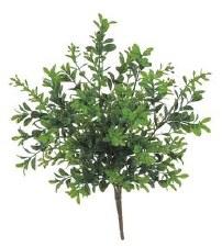 "Boxwood Bush, 12"""