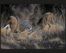 Nature & Wildlife Fabric Panel- Fierce Rivals