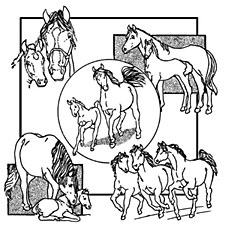 Aunt Martha's Iron On Transfers- Horses #3936