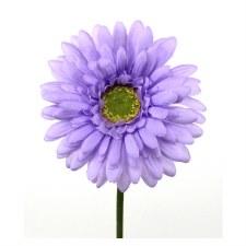 "Gerbera Daisy Stem, 18""- Lavender"